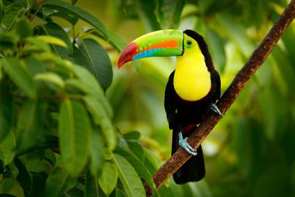 Ein Vogel in Venezuela, der nichts mit Reiseadaptern zu tun hat.
