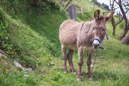 Ein Esel wie auf diesem Foto braucht keinen Reiseadapter in Zypern.
